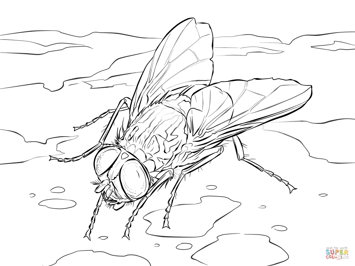 House Fly Coloring Page