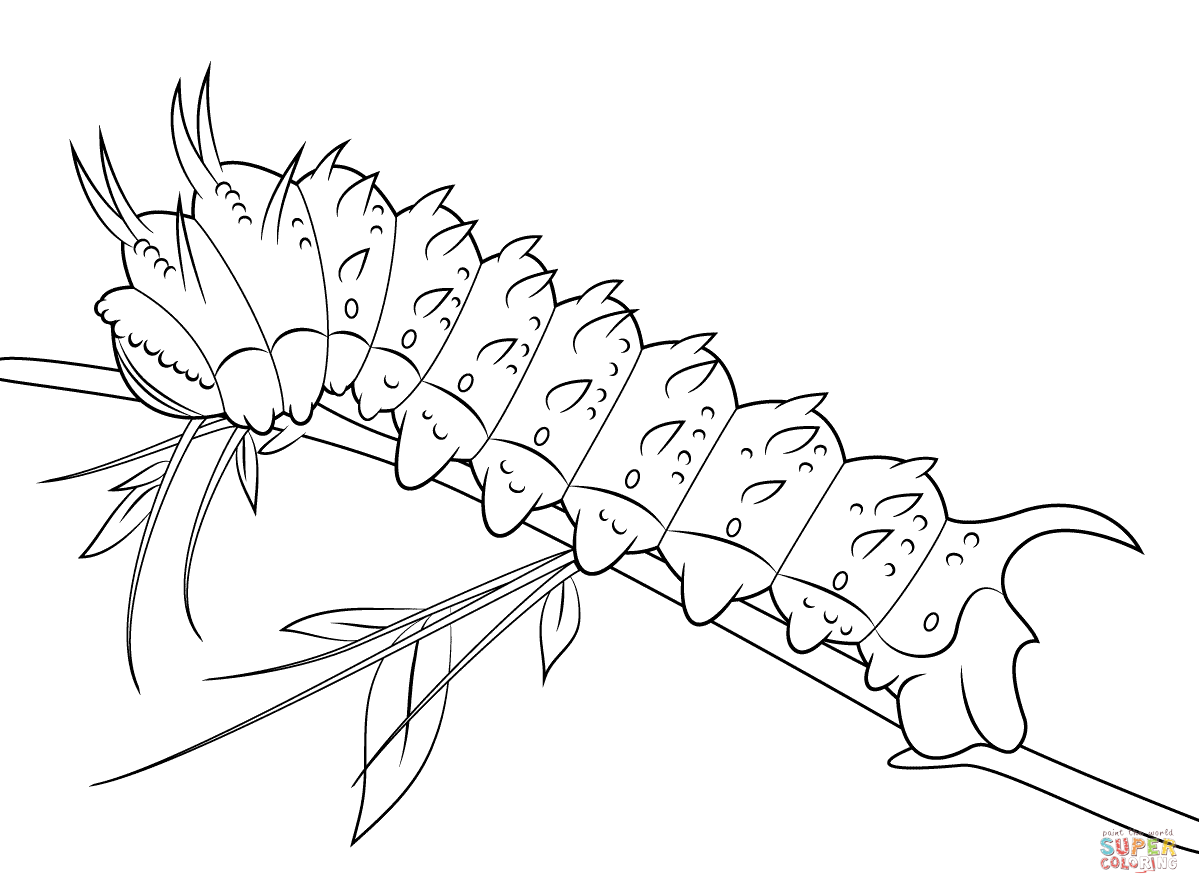 Hubbards Silkmoth Caterpillar Coloring Page