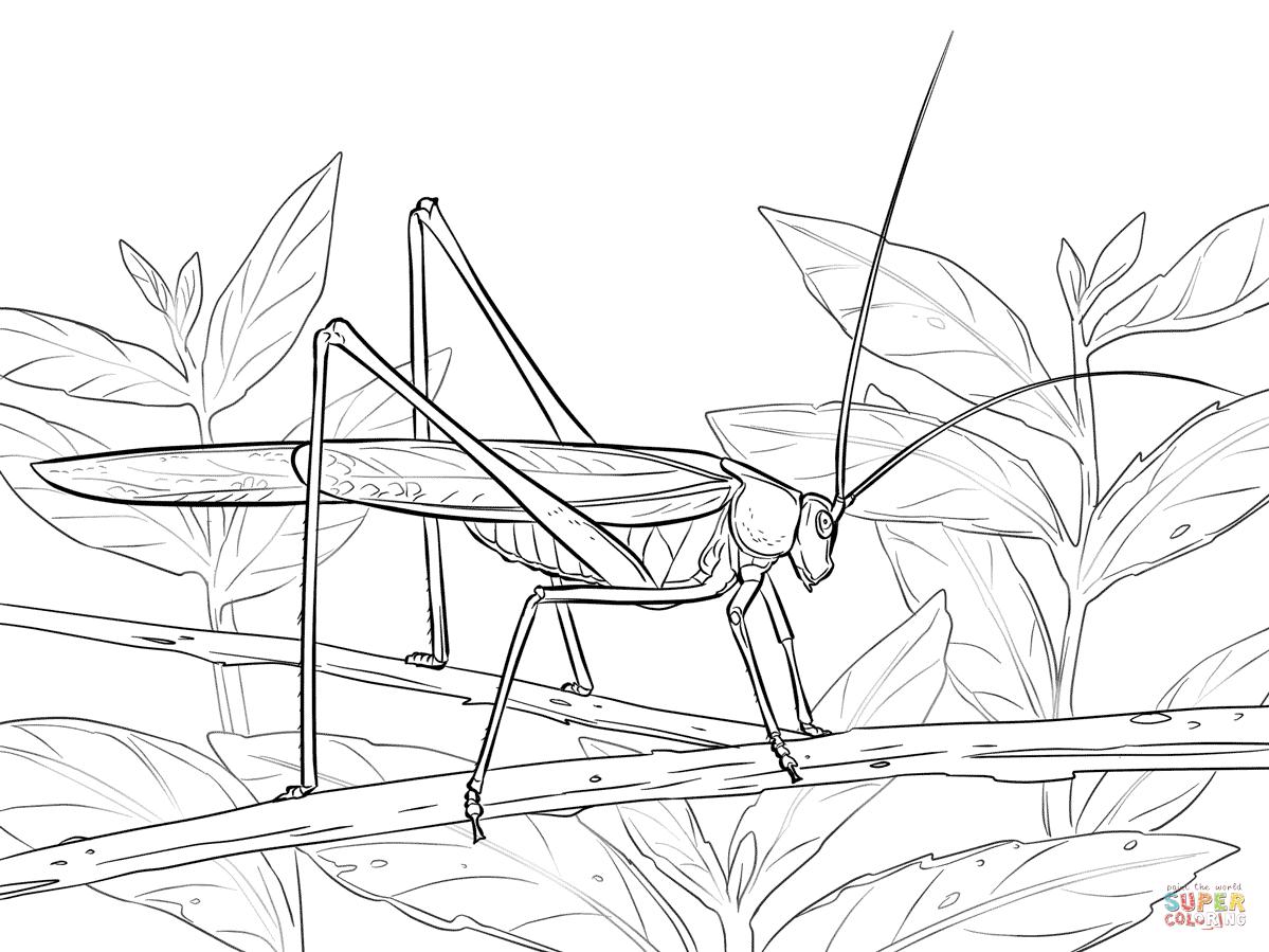 Ausmalbild Heuschrecke