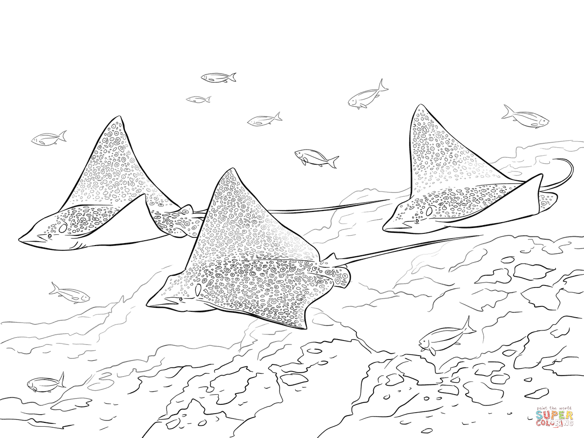 Spotted Eagle Rays Coloring Page Free Printable Coloring