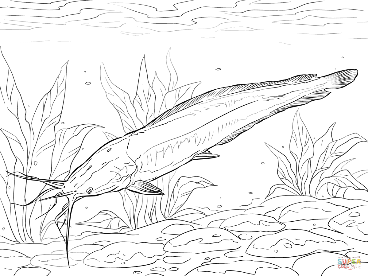 Walking Catfish Coloring Page Free Printable Coloring Pages