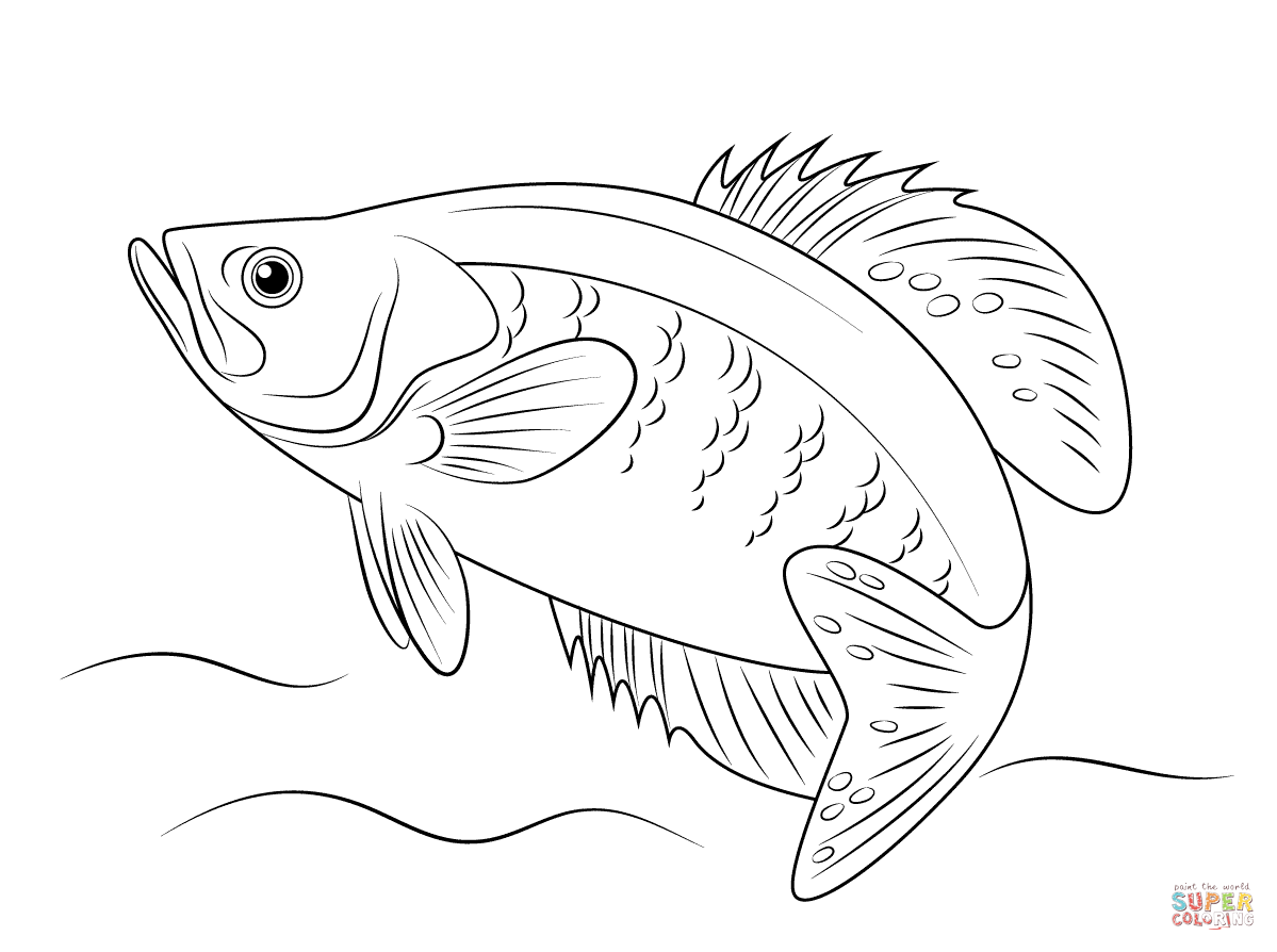 White Crappie Coloring Page