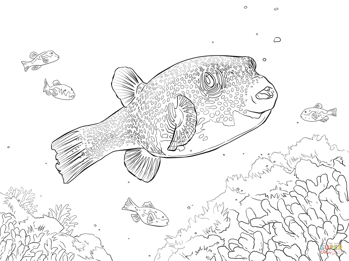 Puffer Fish Coloring Page Free Printable Coloring Pages