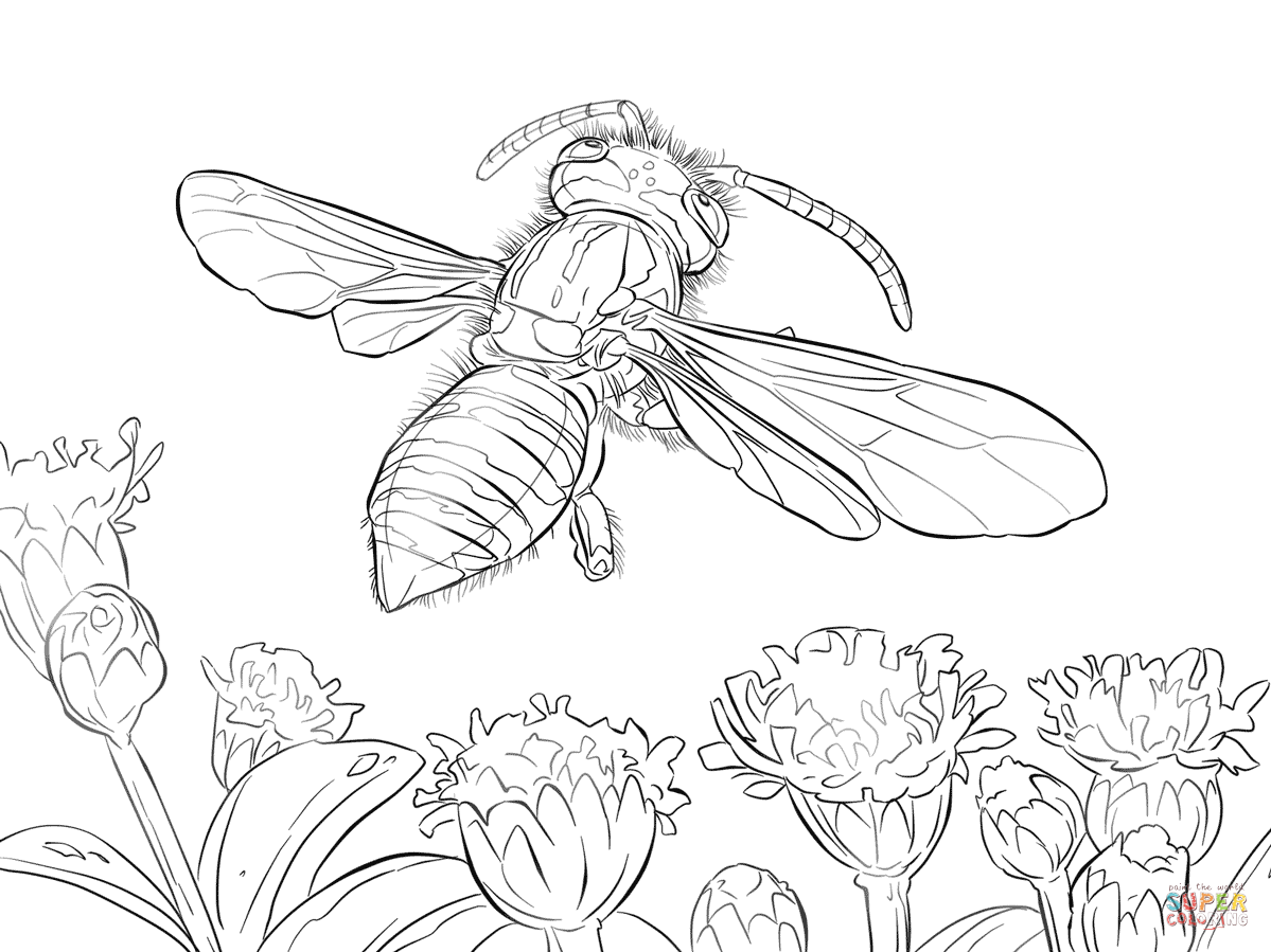 Yellow Jacket Wasp Coloring Page