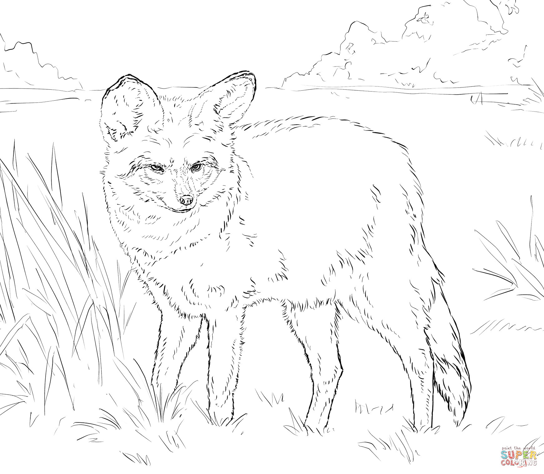 Bat Eared Fox Coloring Page