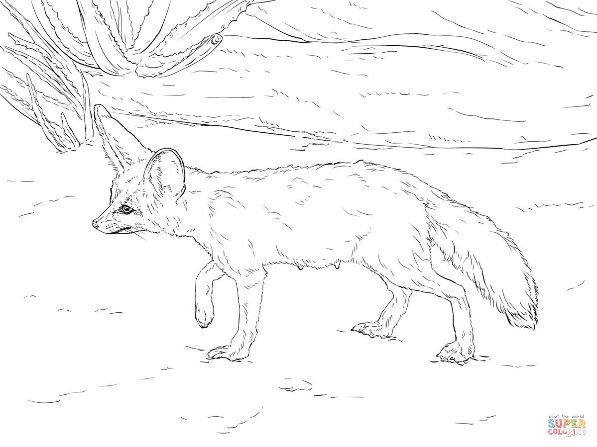 Coyote In Ca