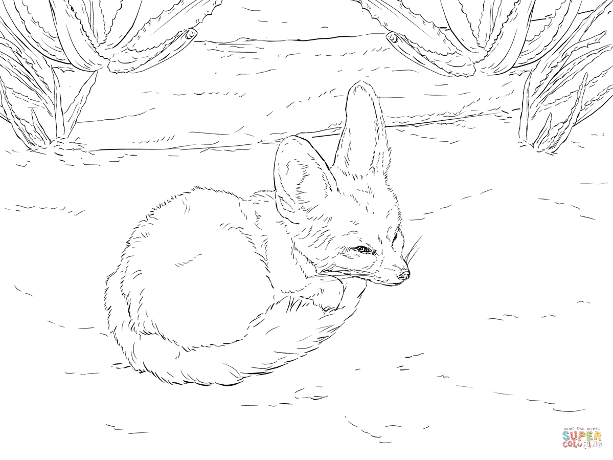Fennec Fox Drawing Tutorial