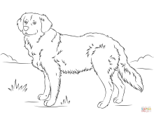 Realistic Golden Retriever Dog Coloring Pages