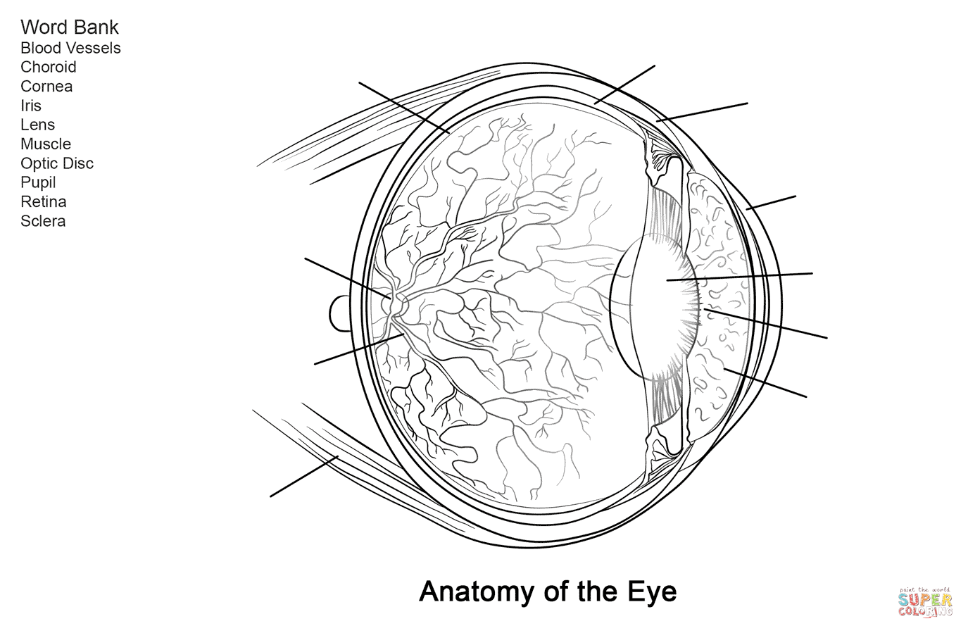 Human Eye Anatomy Worksheet Coloring Page