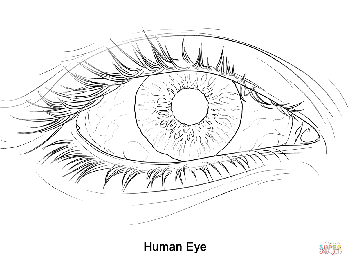 Human Eye Coloring Page Free Printable Coloring Pages