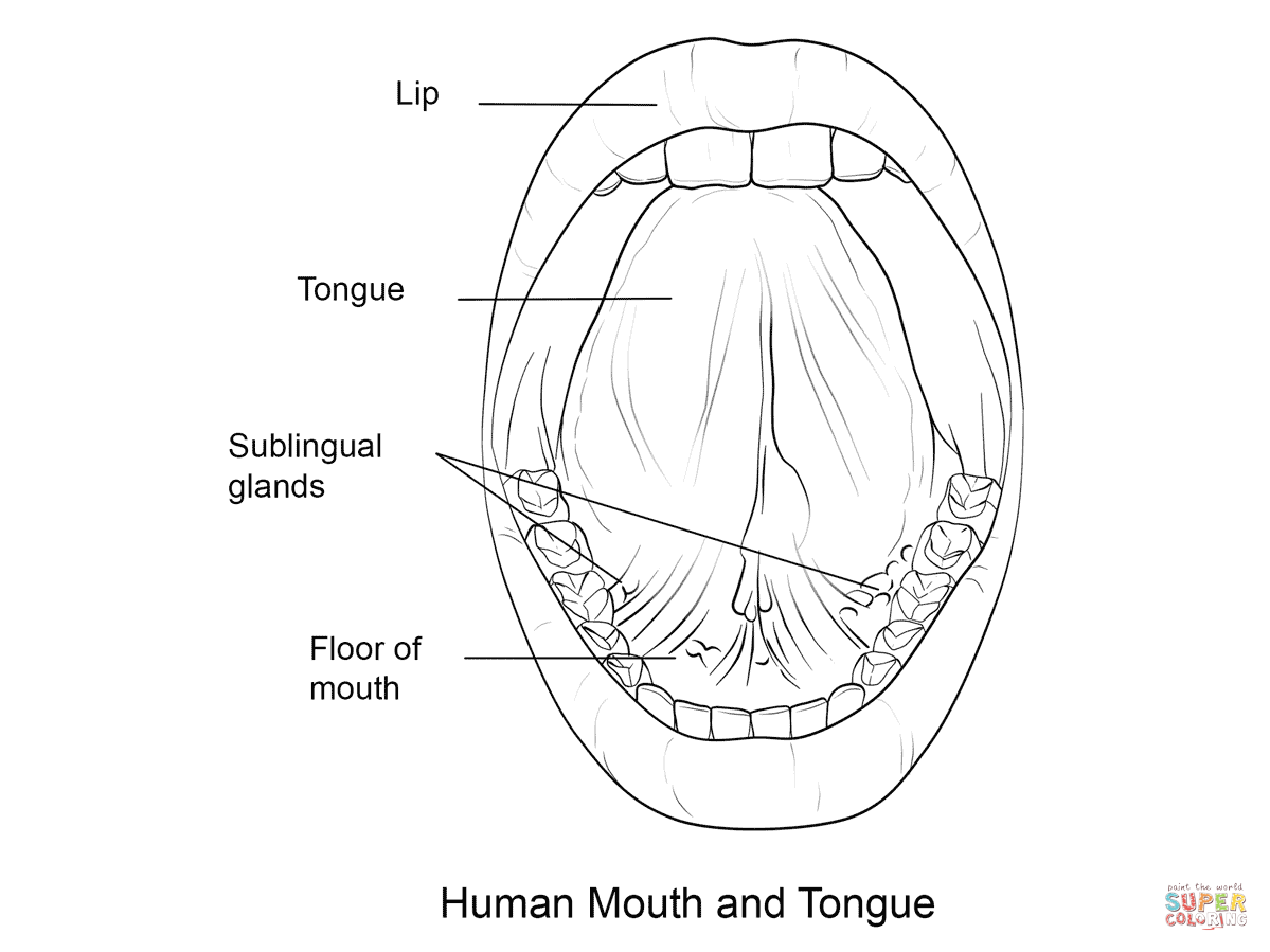 Human Mouth And Tongue Coloring Page
