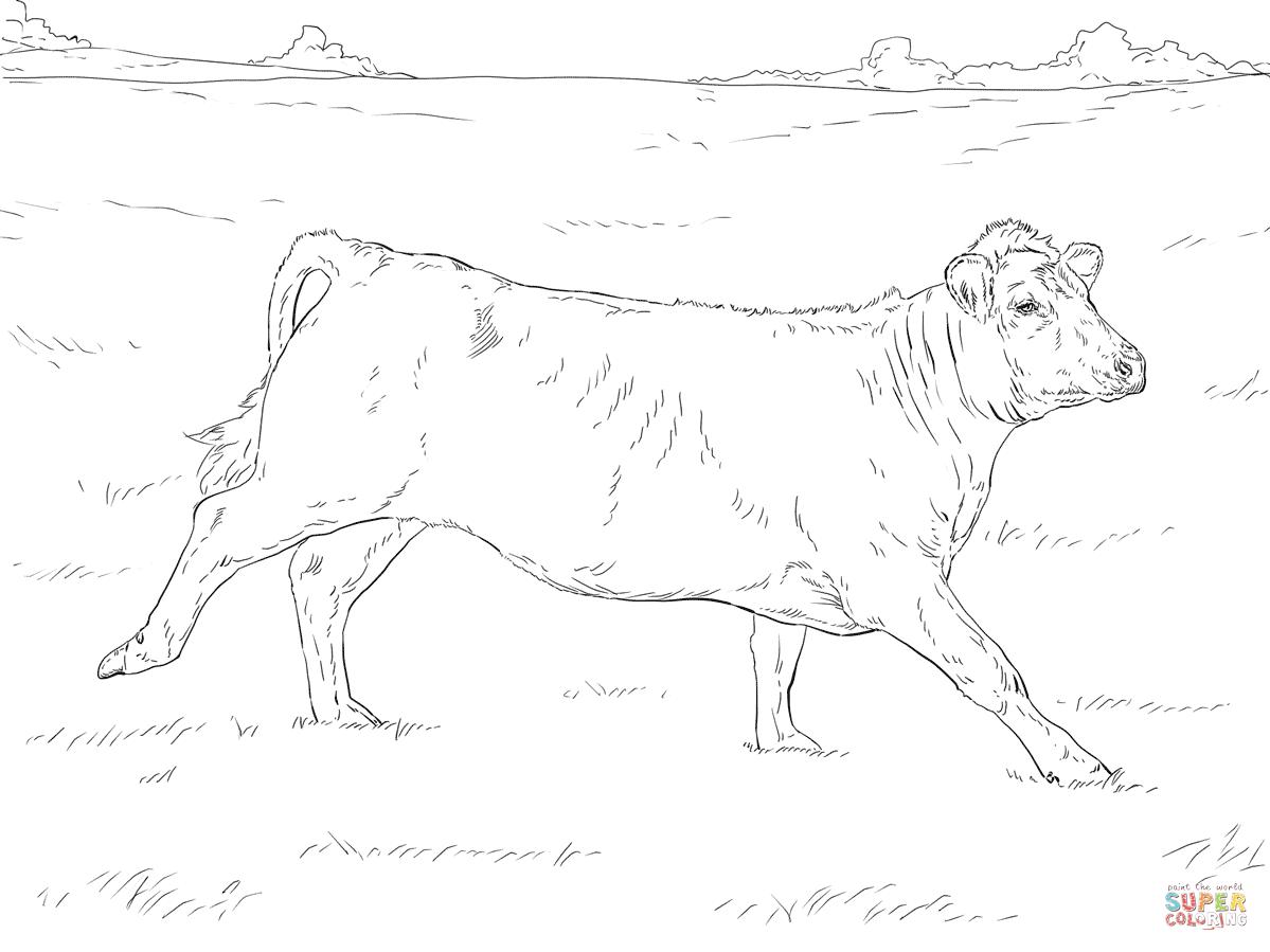 Shadow Of A Bull Worksheet