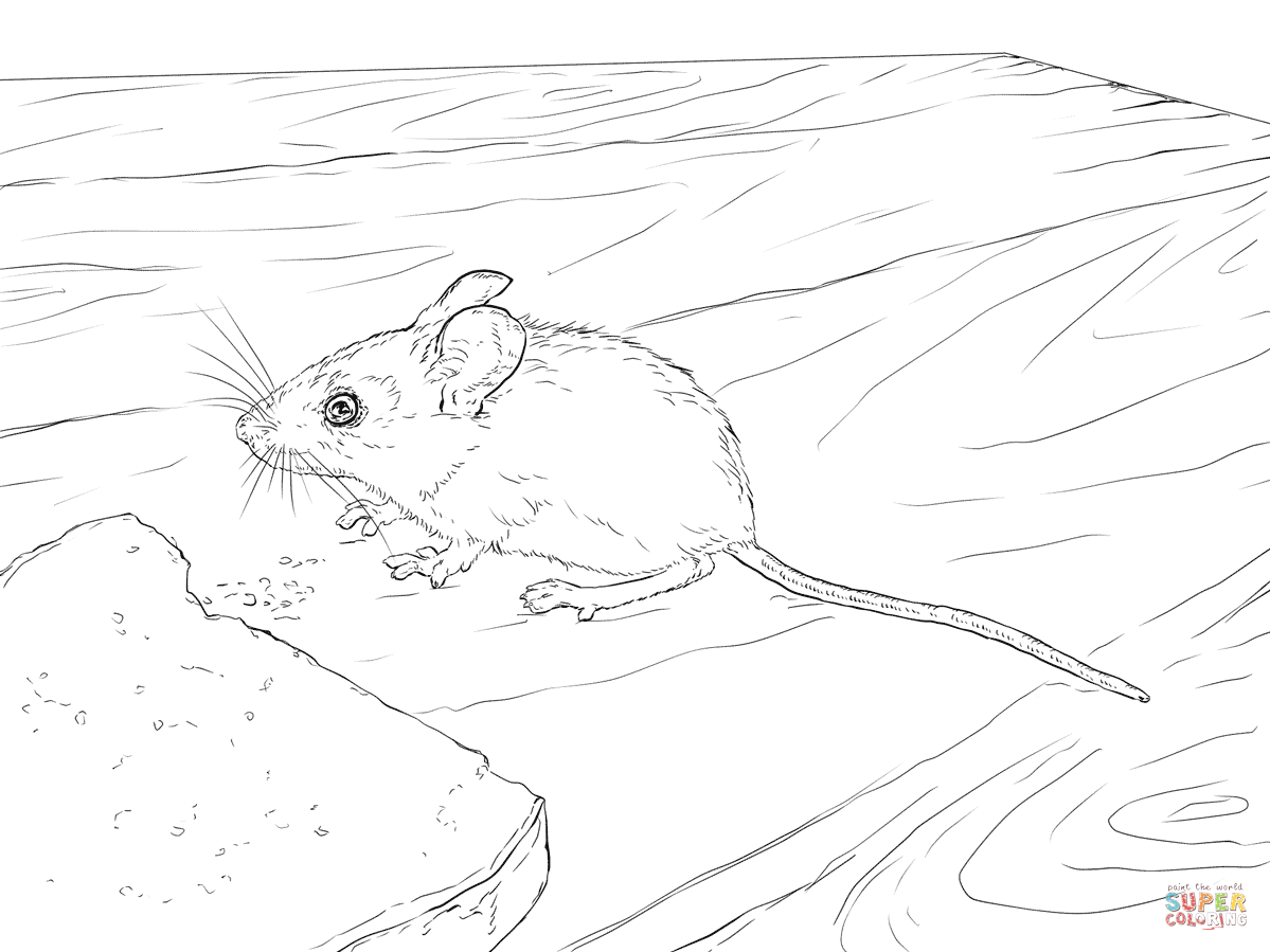 Wood Mouse Coloring Page