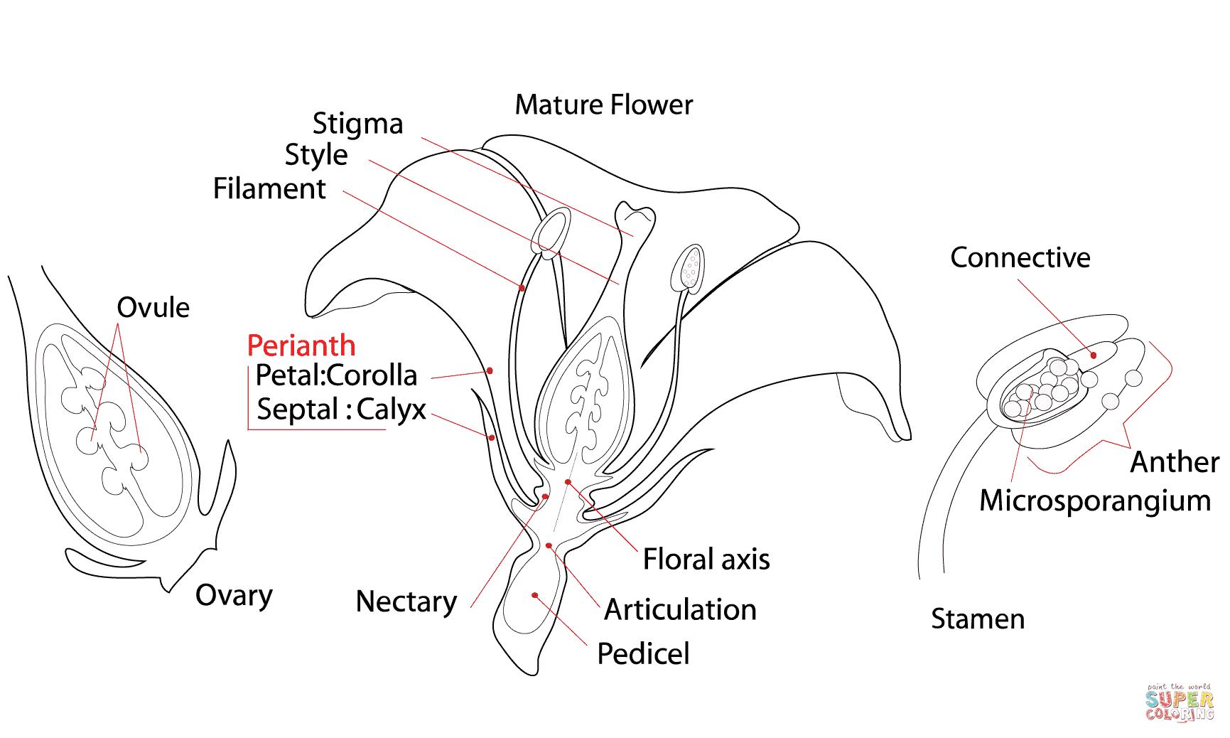 Label The Flower Worksheet