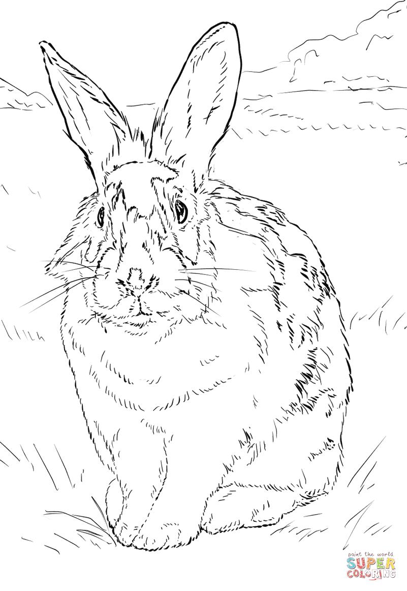 Ausmalbild Schwarz Weisses Kaninchen Ausmalbilder