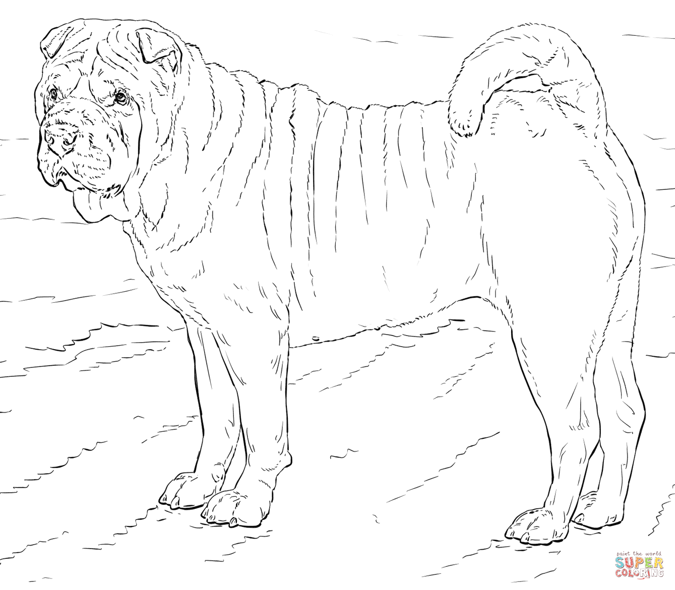 Shar Pei Dog Coloring Page