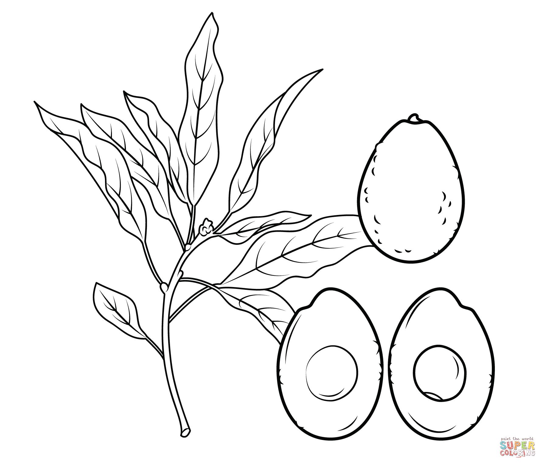 Ausmalbild Avocado Zweig Ganze Avocado Und Querschnitt