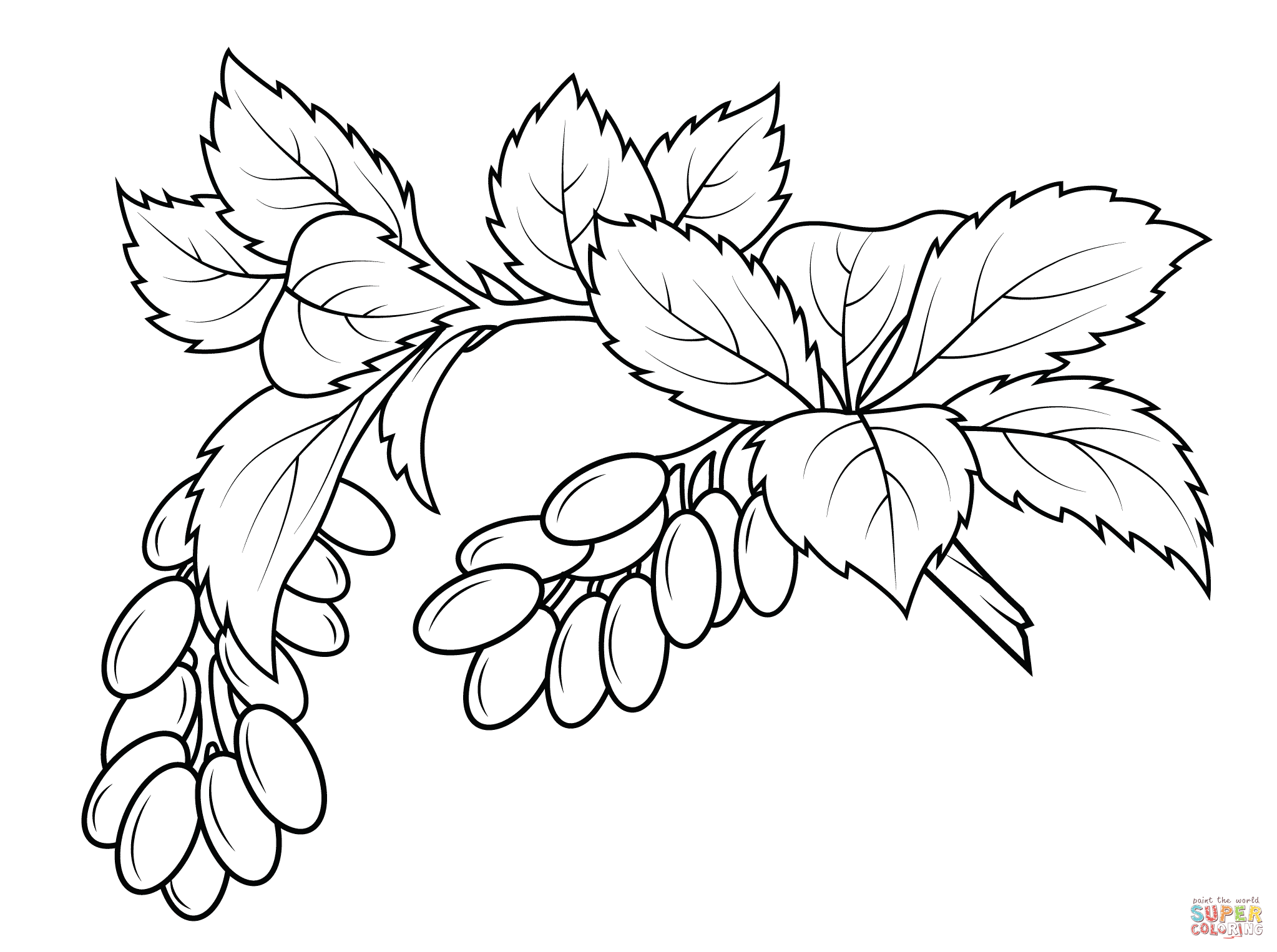 Berberis Coloring Page