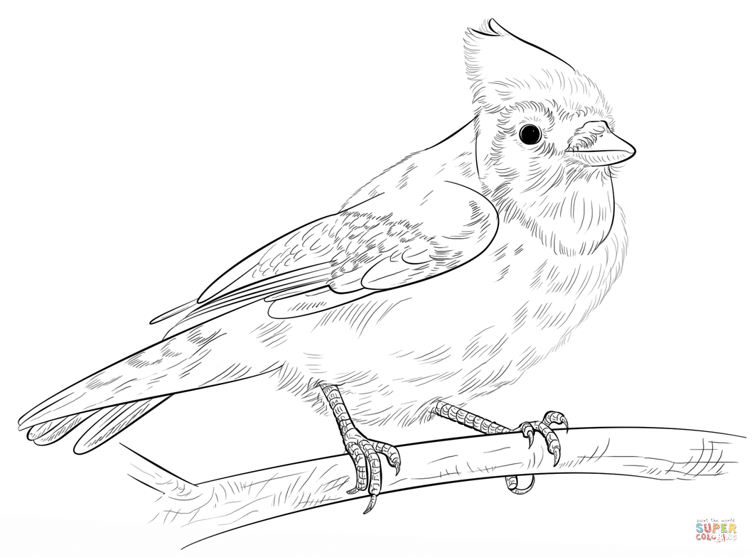 Blue Jay On A Branch Coloring Page