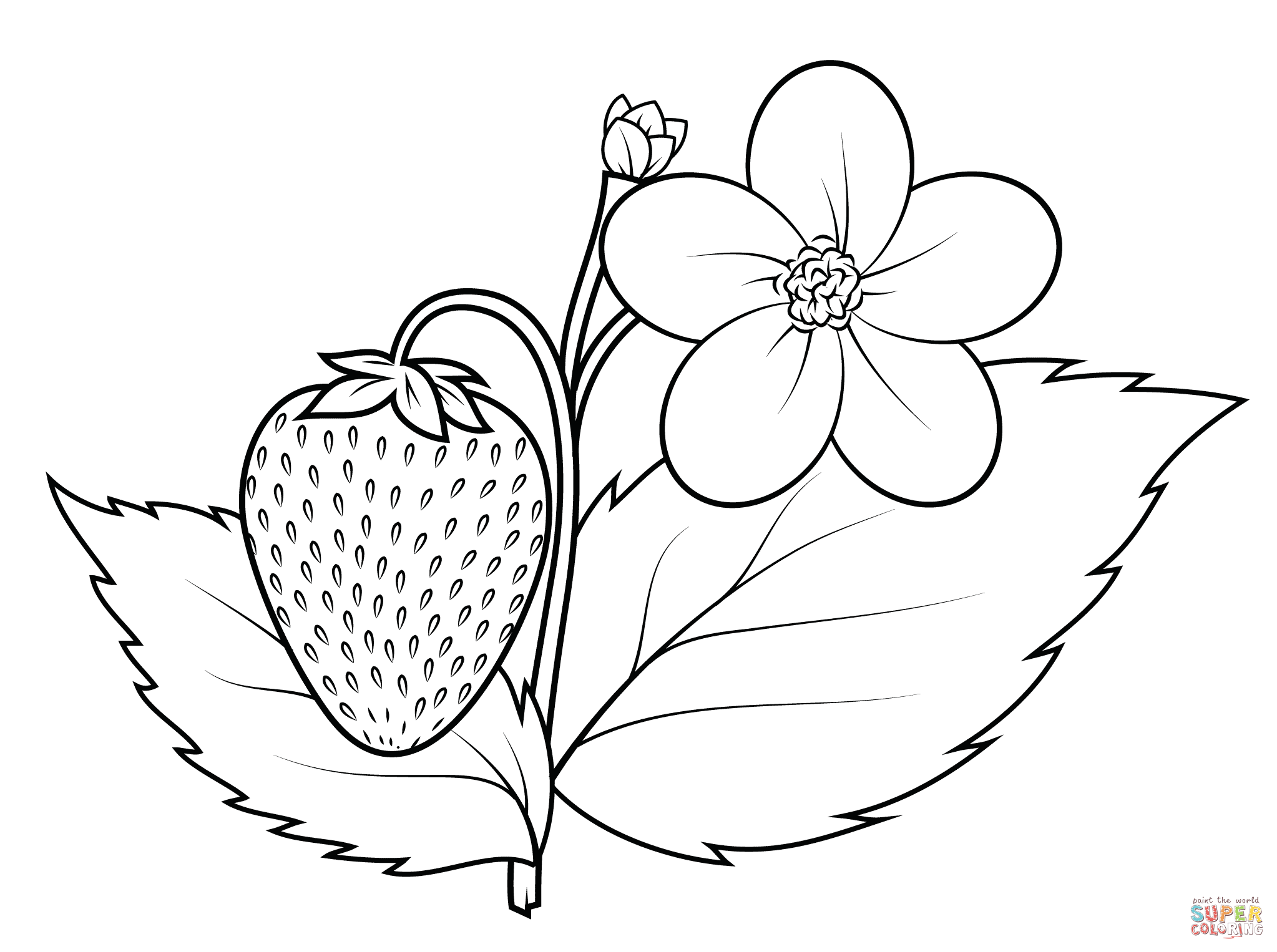Strawberry Plant Coloring Page