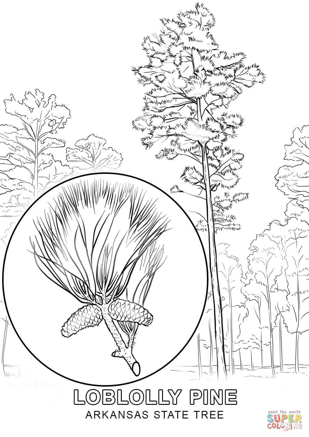 Arkansas State Bird And Flower Coloring Pages Best Bird Colletion 2018
