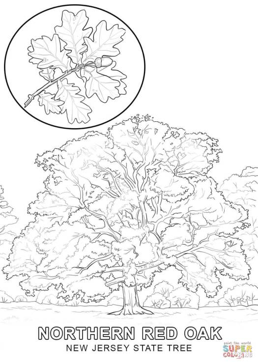 New York State Tree Coloring Page