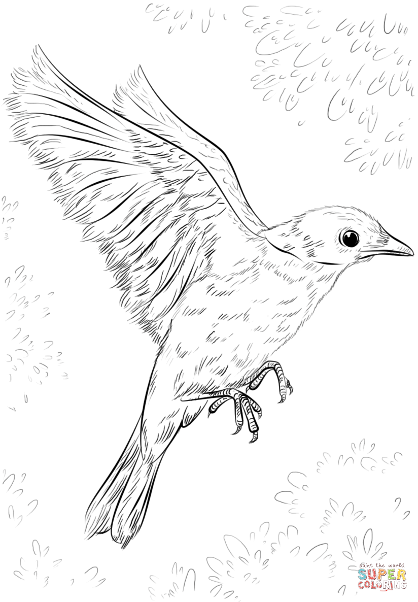 blue bird flying coloring page  free printable coloring pages