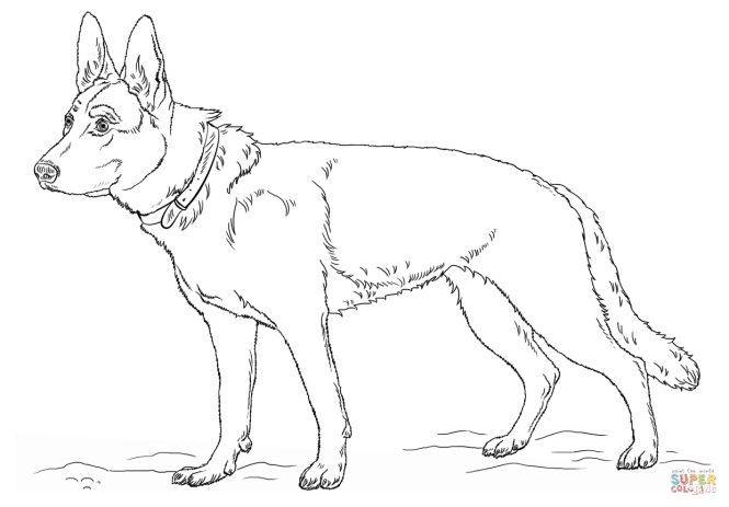 Click The German Shepherd Dog Coloring Pages