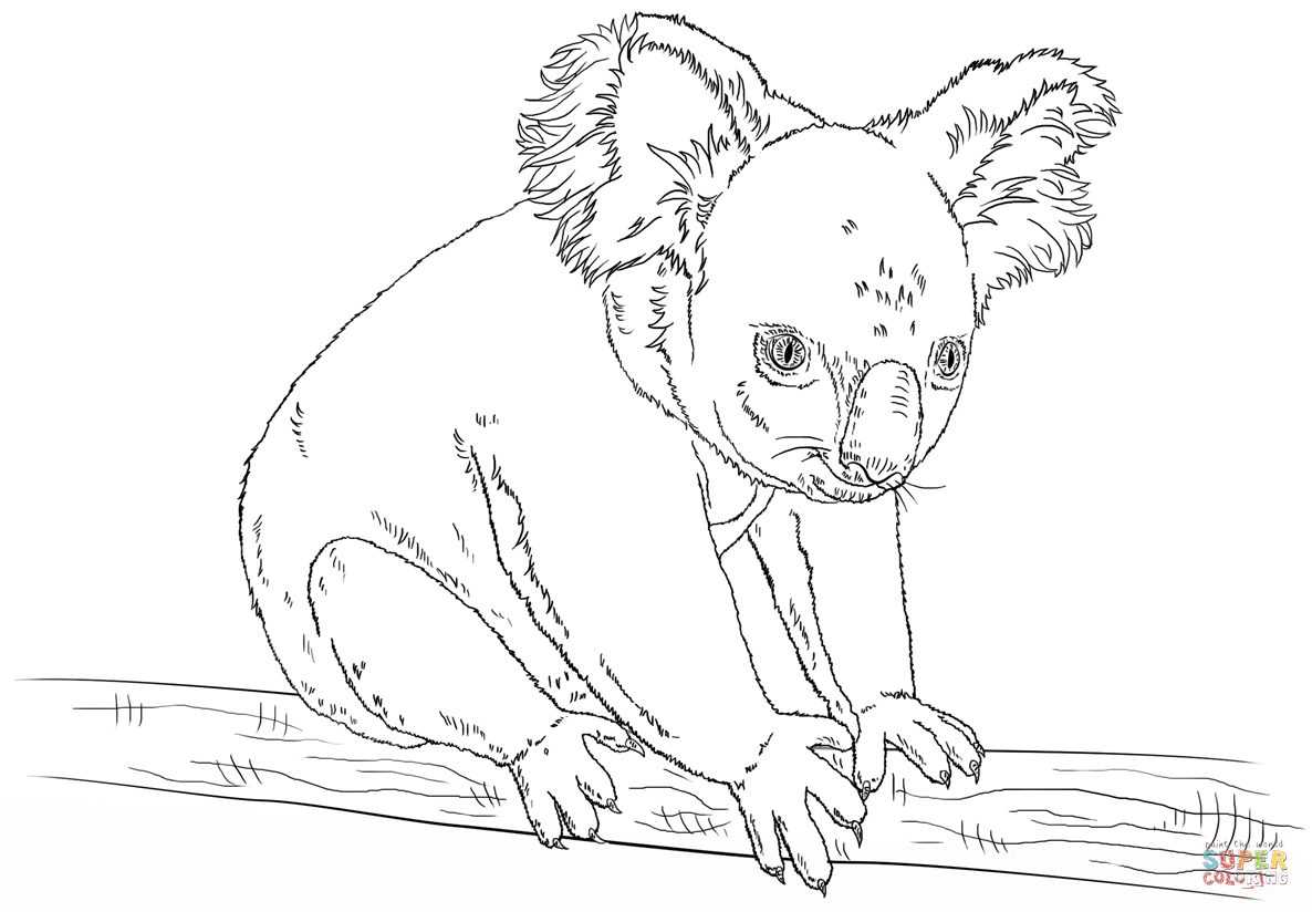 Koala Sitting On A Branch Coloring Page Free Printable Coloring
