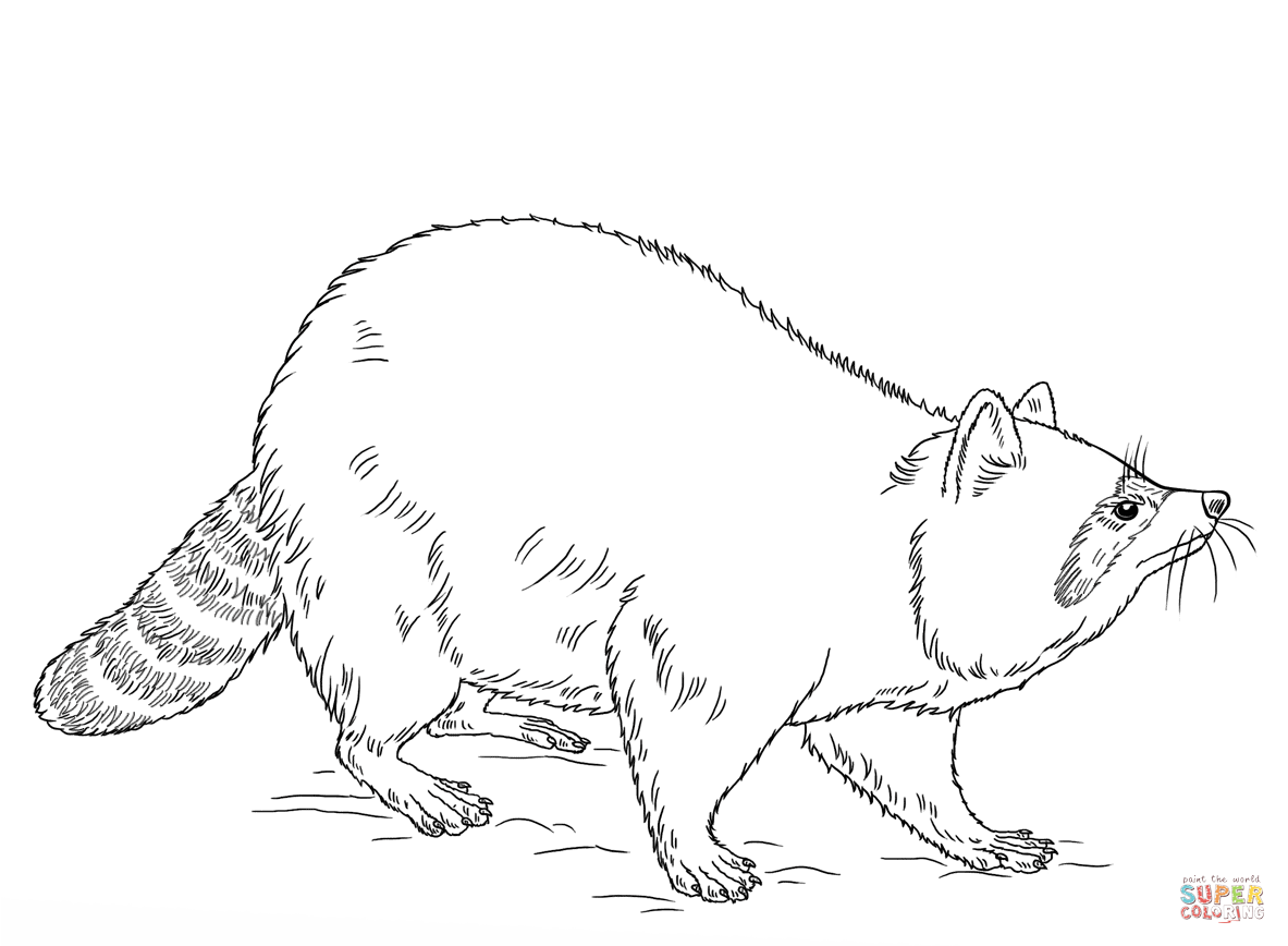 Raccoon Coloring Pages