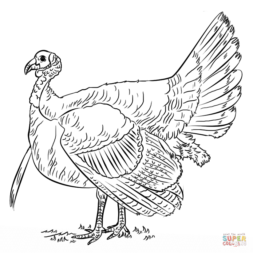 Turkey Coloring Page Free Printable Coloring Pages