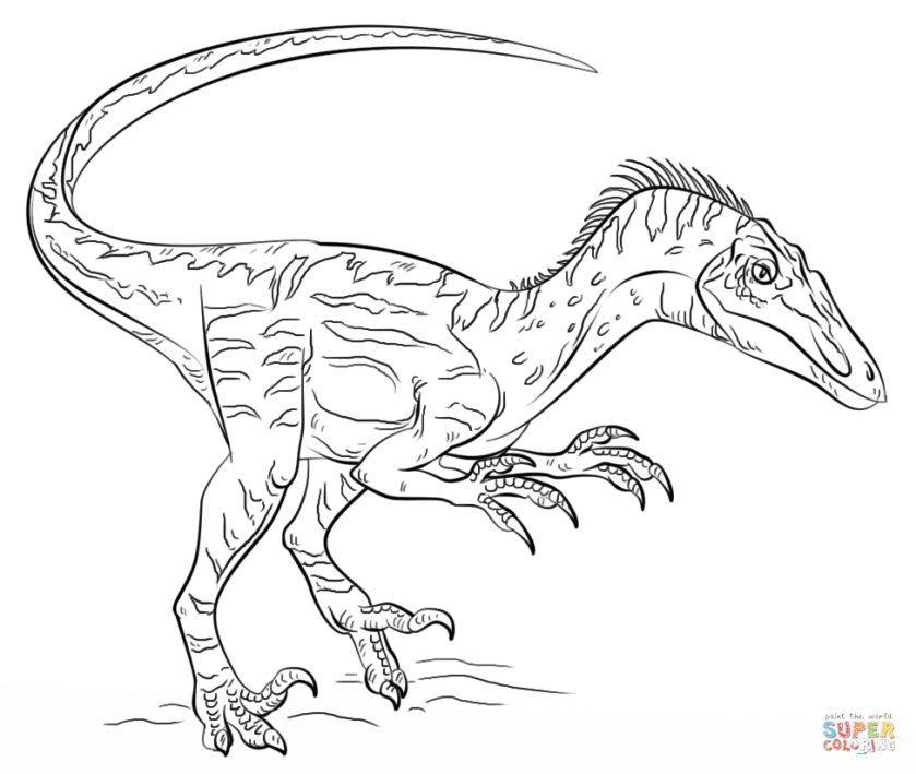 velociraptor coloring page  free printable coloring pages
