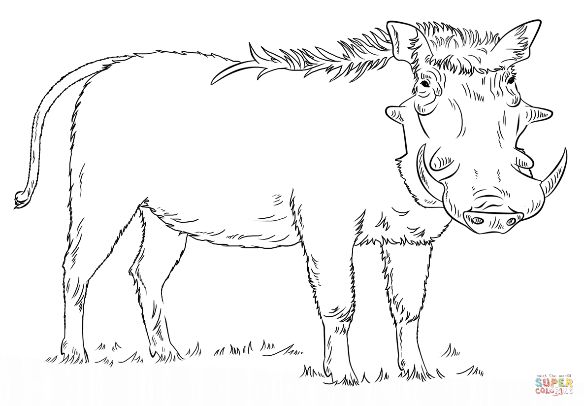 Warthog Coloring Pages Coloring Pages