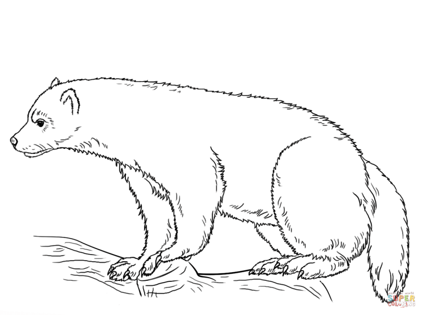 wolverine coloring page  free printable coloring pages