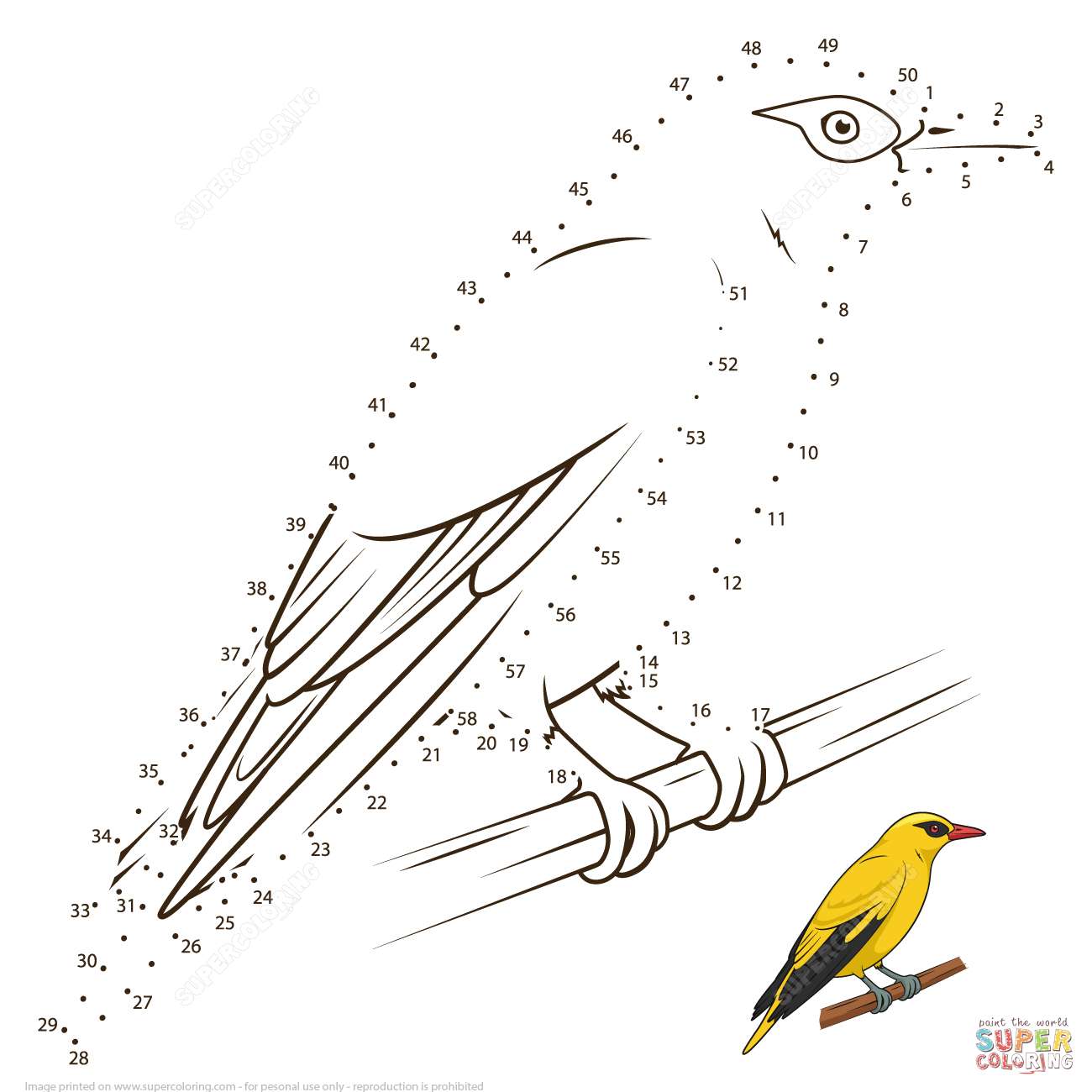 African Golden Oriole Dot To Dot