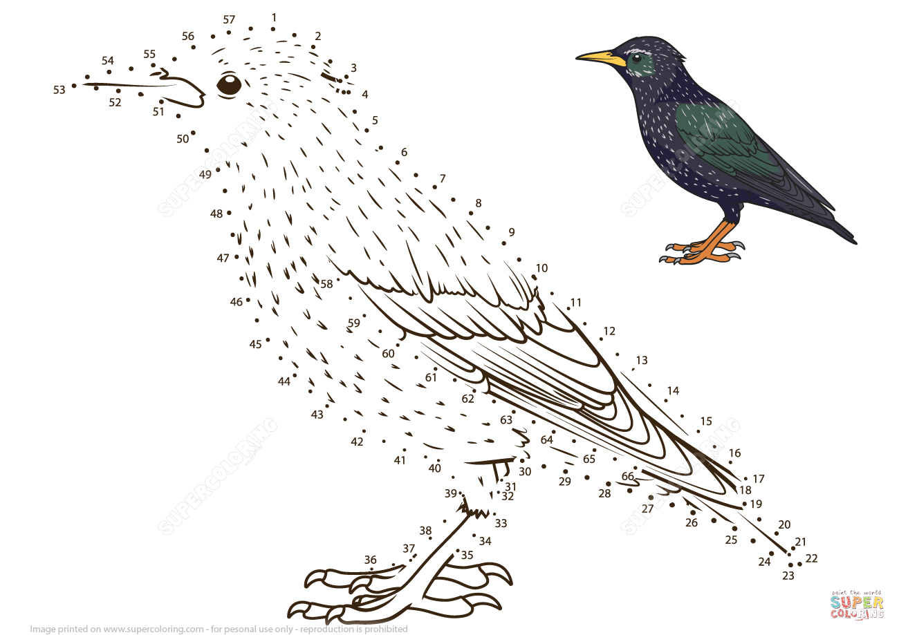 Starling Dot To Dot