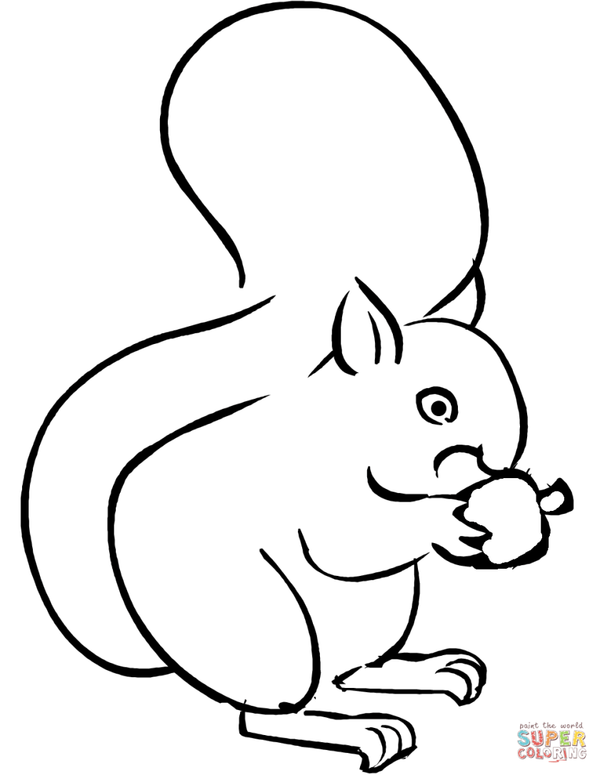 squirrel eating acorn coloring page  free printable