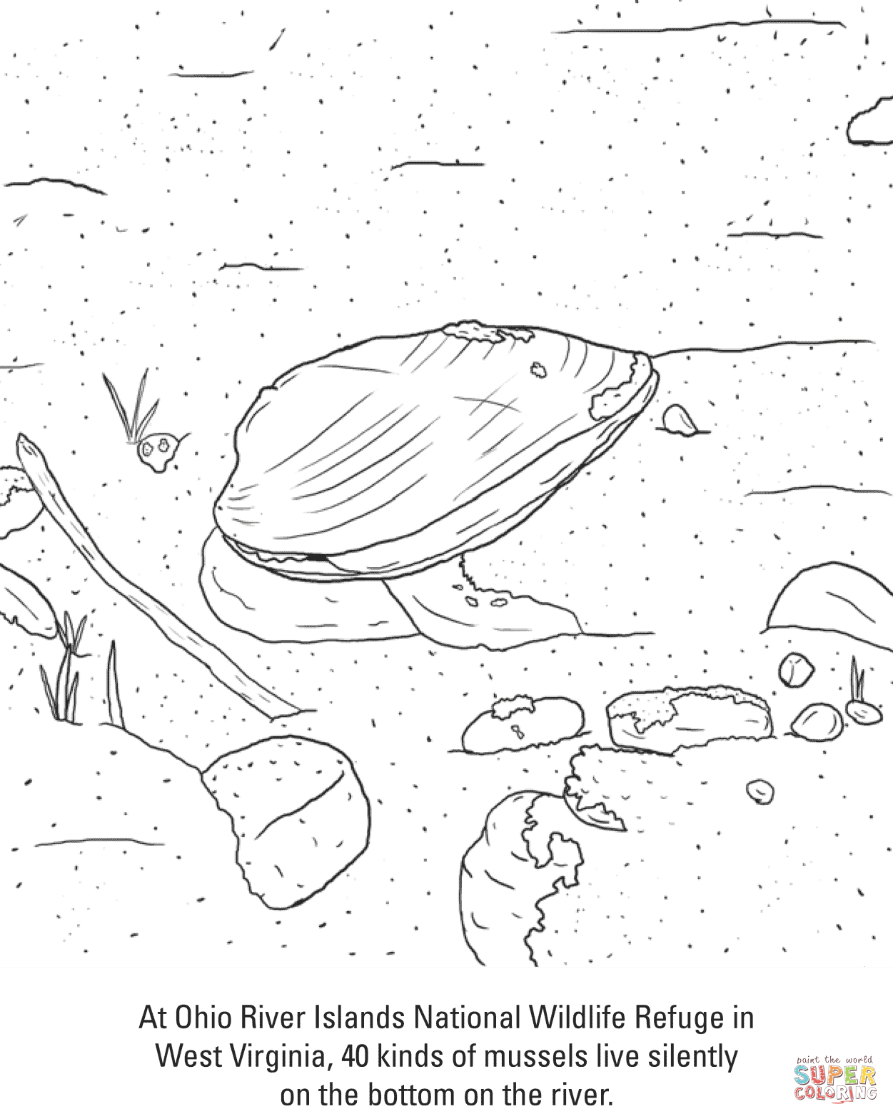 Ohio River Mussels Coloring Page