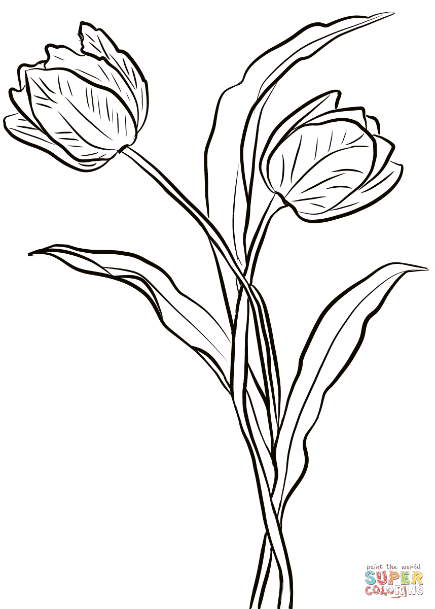 Two Tulips Coloring Page Free Printable Coloring Pages