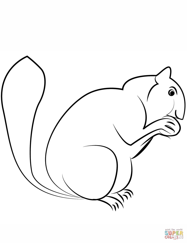 Squirrel Coloring Page
