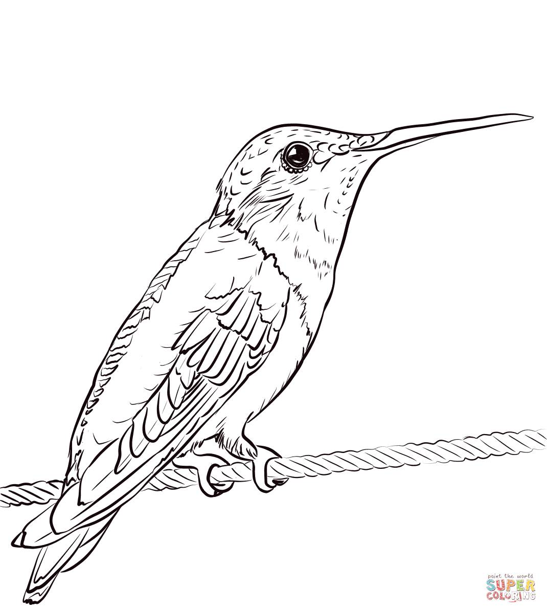 Ruby Throated Hummingbird Coloring Page