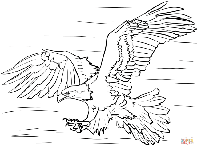 Bald Eagle Diving for Prey coloring page  Free Printable Coloring