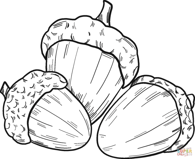 Acorns coloring page  Free Printable Coloring Pages