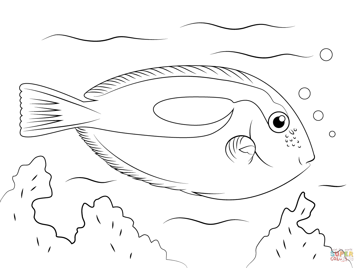 Blue Tang Coloring Page