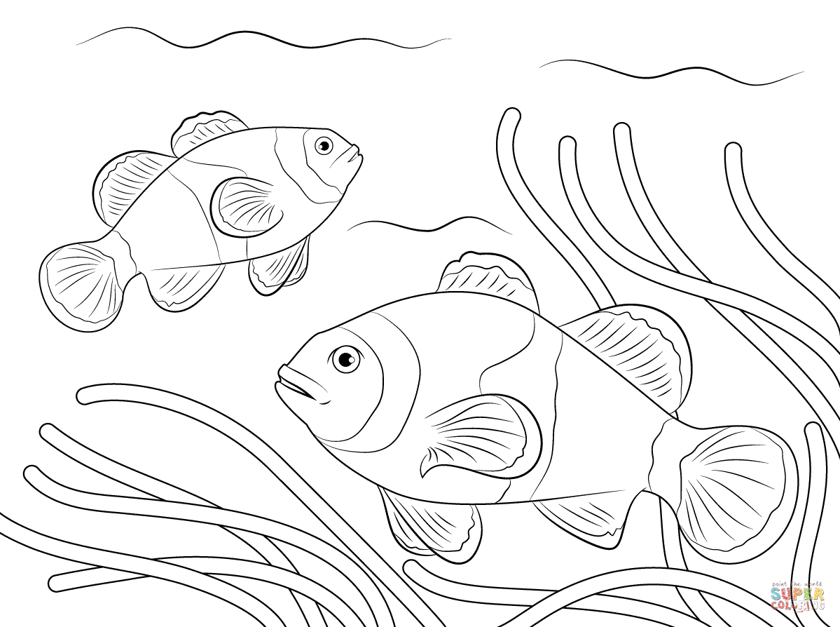 Ocellaris Clownfish Coloring Page Free Printable Coloring Pages