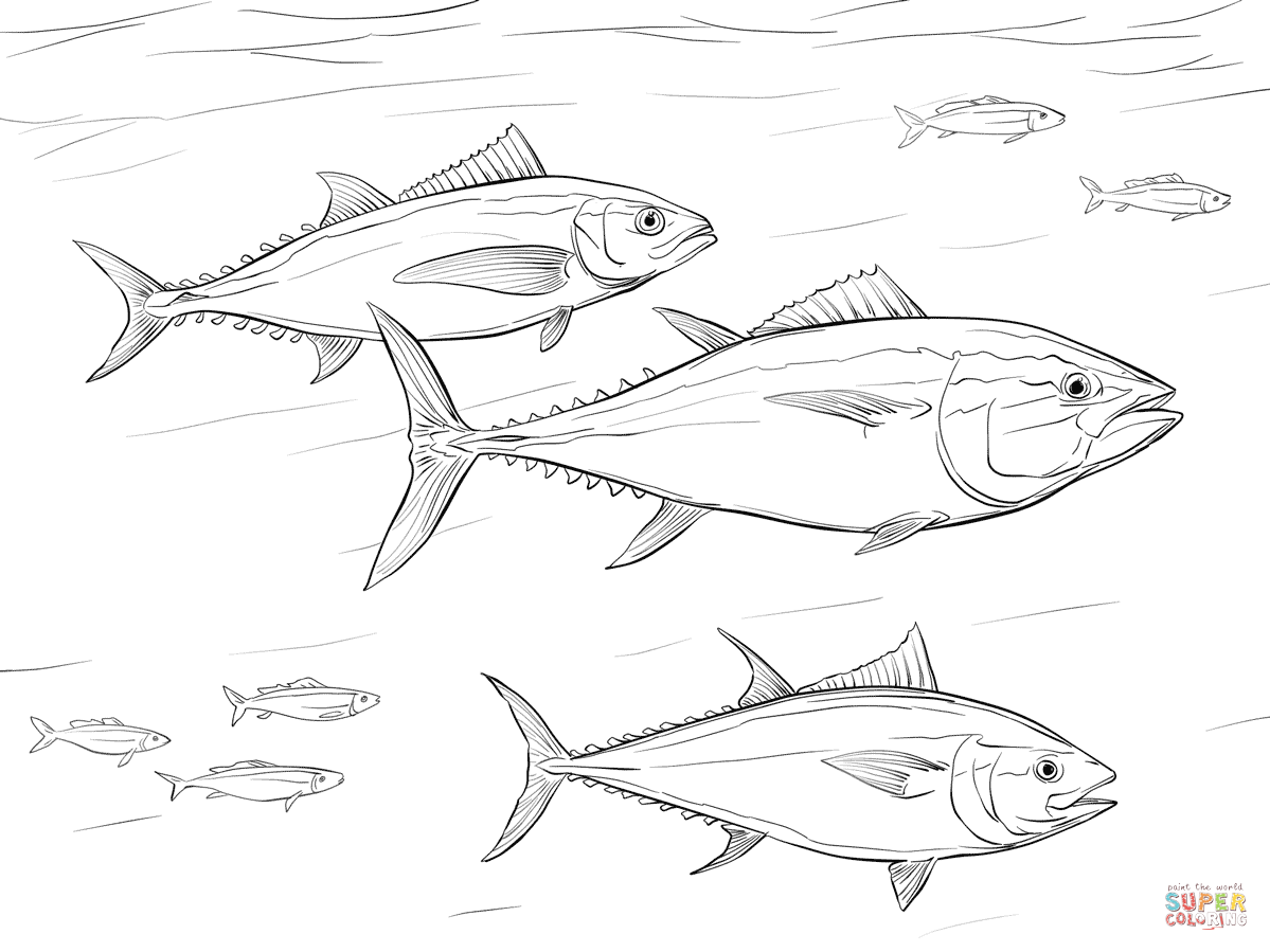 Pacific Bluefin Tuna Shoal Coloring Page