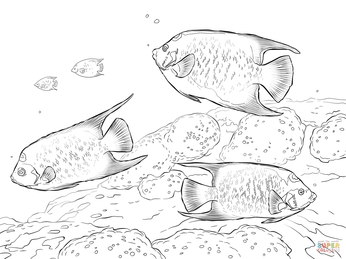 Queen Angelfishes Coloring Page