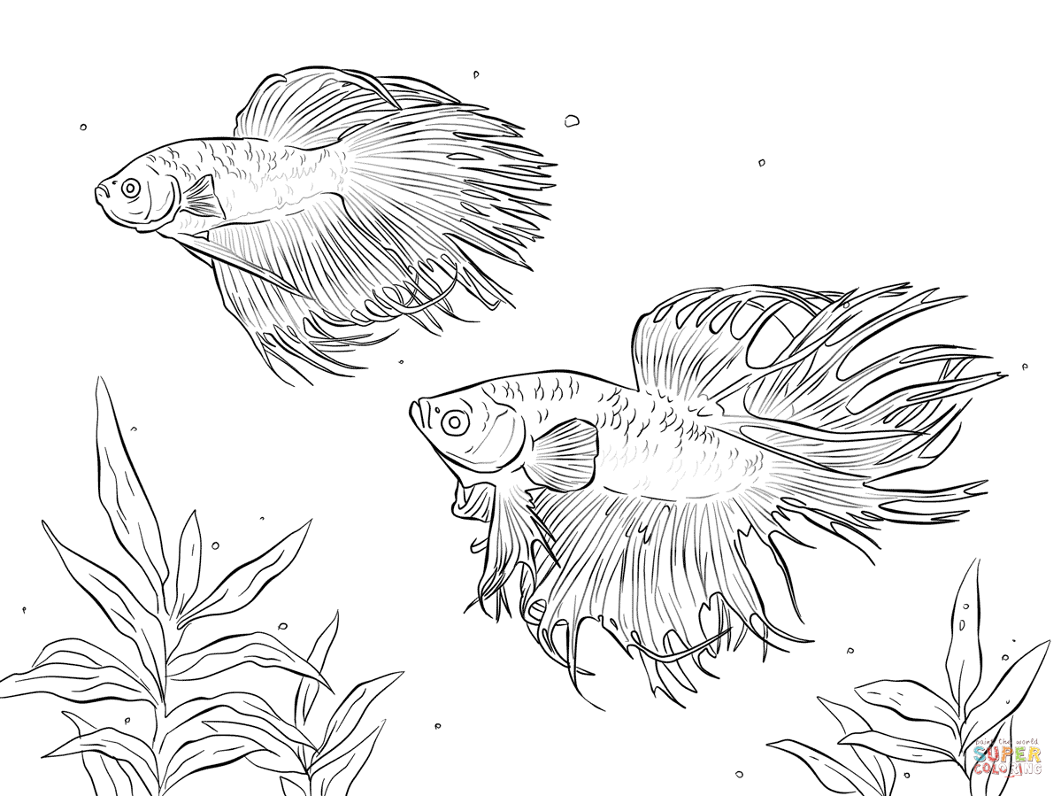 Two Siamese Fighting Fishes Coloring Page