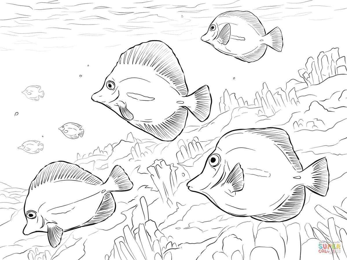 Yellow Tangs Coloring Page