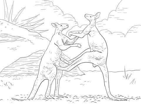 Fighting Red Kangaroos Coloring Page Free Printable